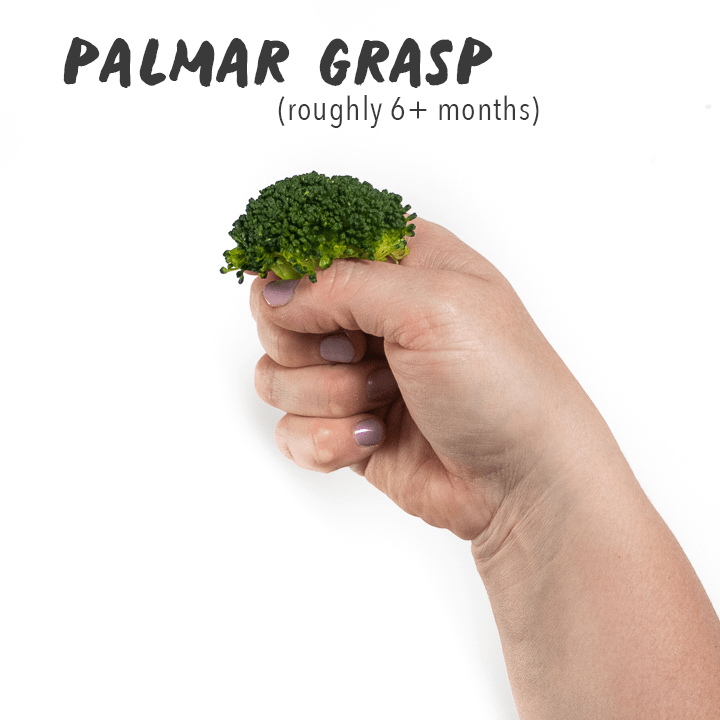 Hand holding a floret of broccoli.