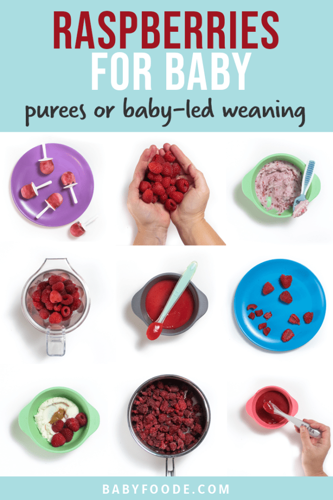Graphic for post - raspberries for baby - purees or baby led weaning. 9 images in a grid of colorful baby plates and bowls filled with ways baby can eat raspberries.